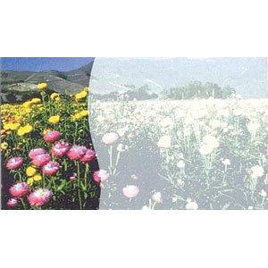 画像1: 片面 ミニカード 写真の花デザイン(印字はできません)