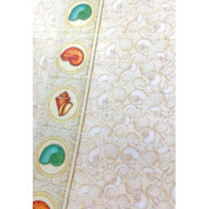 画像4: エレガントなイメージの貝のデザイン