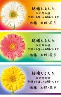 元気な色のお花デザイン!