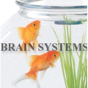 画像2: 金魚鉢、水槽のデザイン