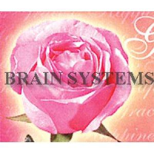 画像2: カラフルなバラのデザインのアドレスラベル